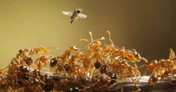Kisah Semut dan Lalat