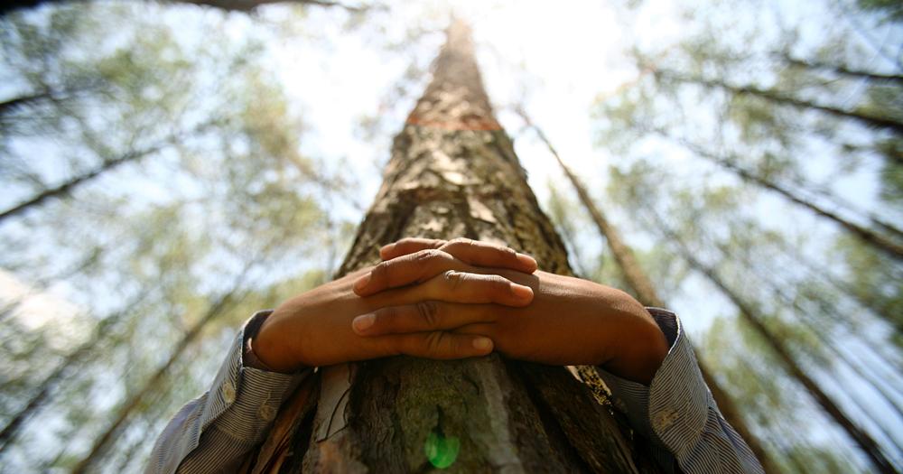 Kisah antara pohon dan seorang anak